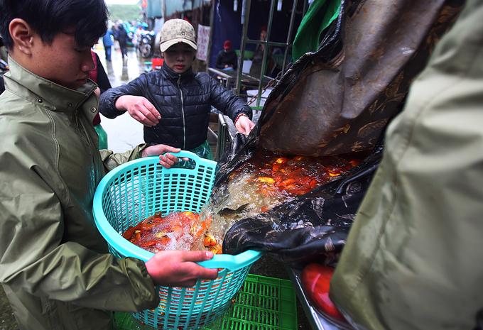 Chợ cá chép ở Hà Nội đỏ rực trước ngày ông Táo lên trời