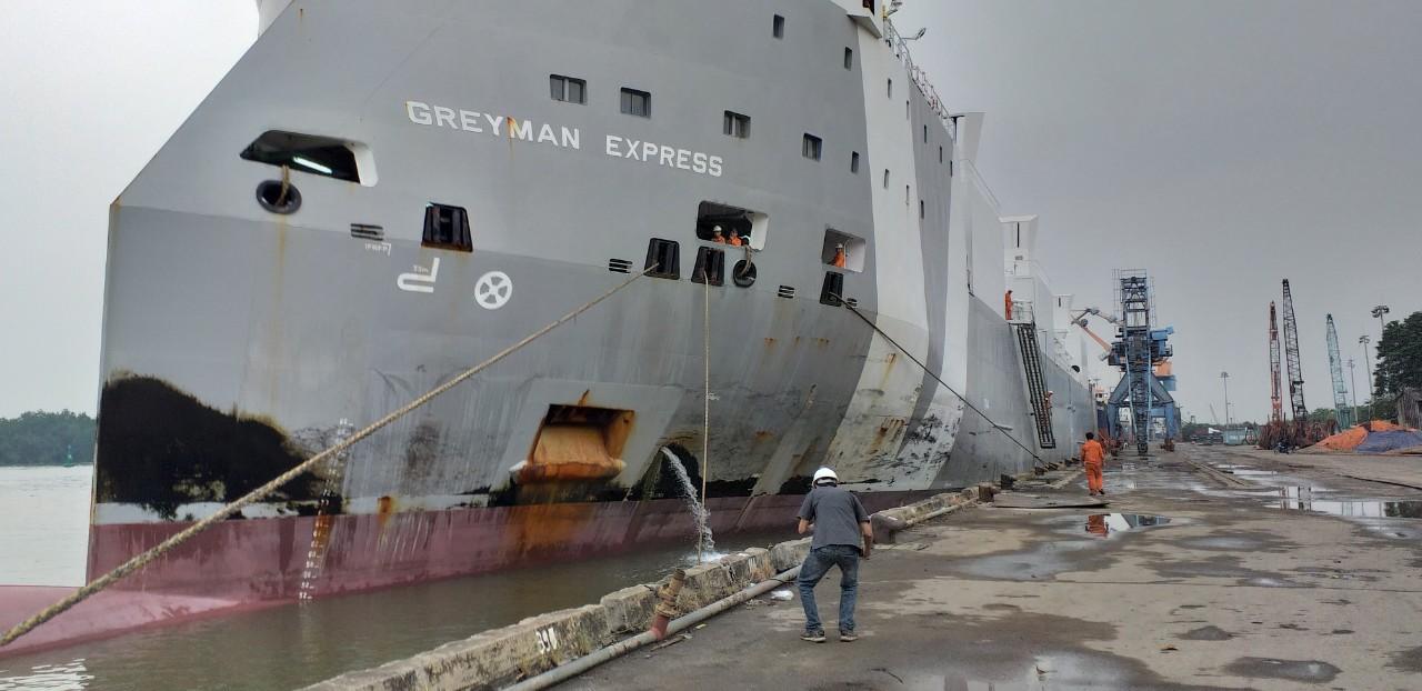 Hai tầu bò Úc Greyman và Girolando cập cảng HP